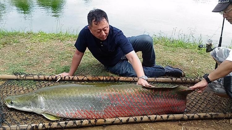 山本 ピラルク 釣り